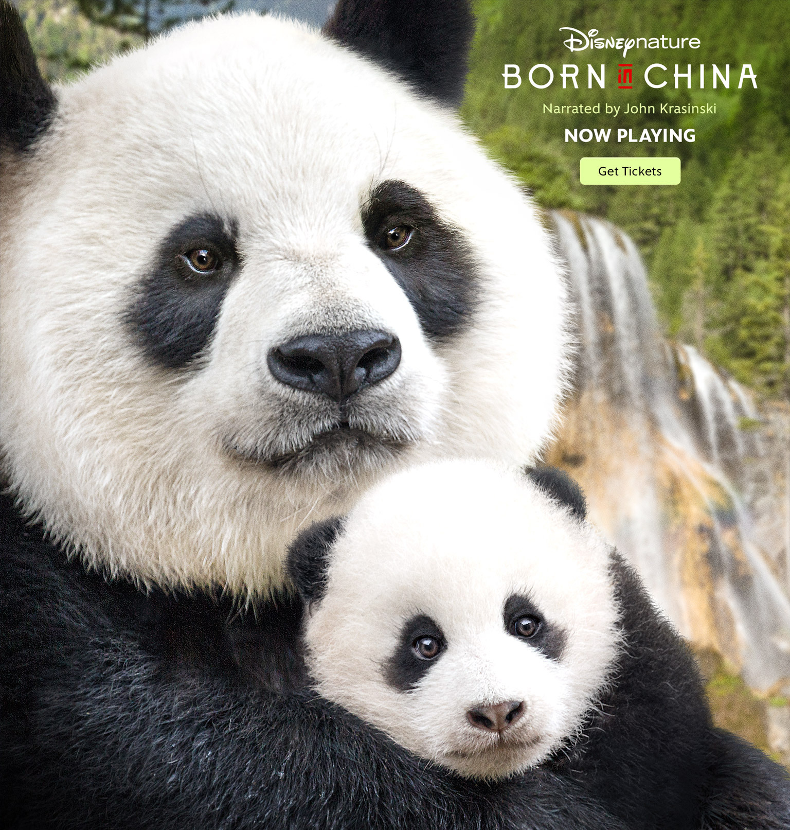 """""""Born in China"""" Moviegoers Help Protect Wild Pandas and Snow Leopards"""